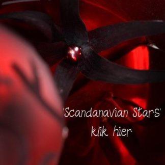 Scandinavian Stars
